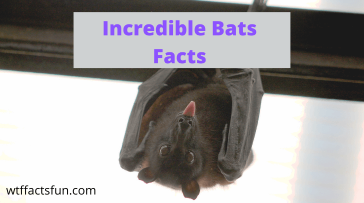 Incredible Bats Facts