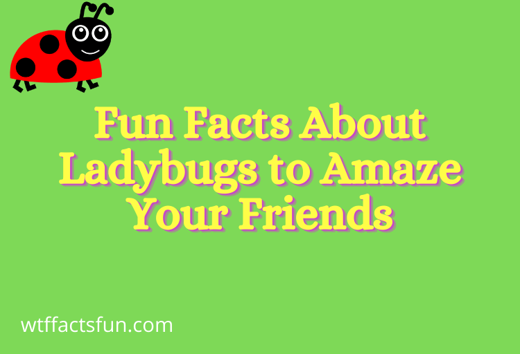 Fun Facts About Ladybugs to Amaze Your Friends