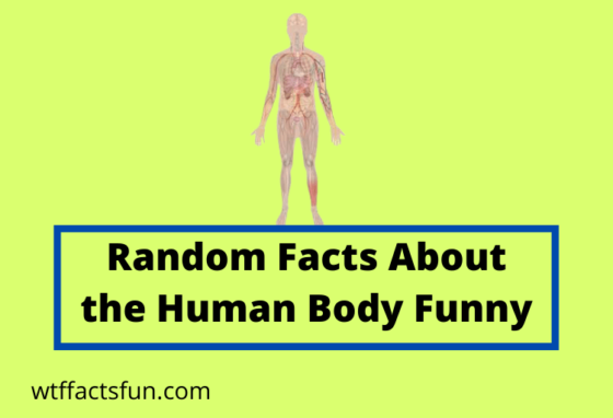 Random Facts About the Human Body Funny