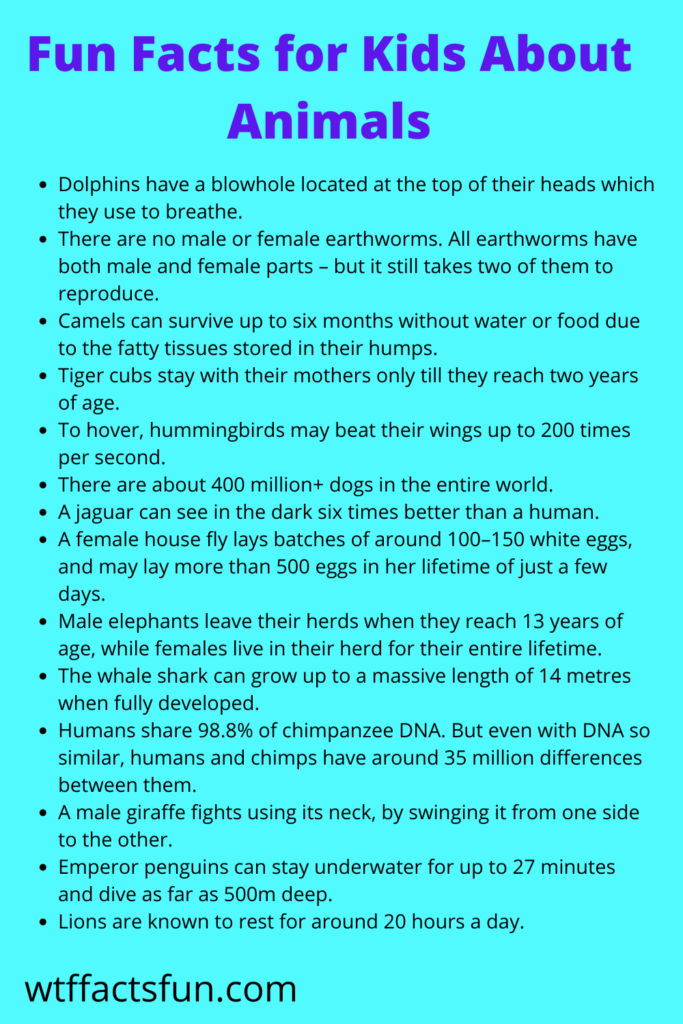 Fun Facts for Kids About Animals
