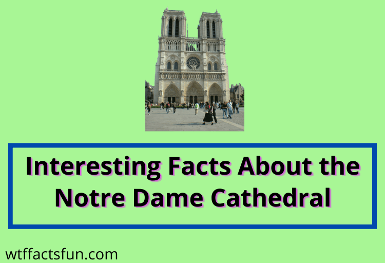 Interesting Facts About the Notre Dame Cathedral